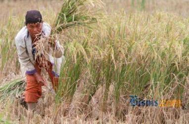 Petani OKU Timur Dibantu Semprot Pestisida Atasi Hama Wereng