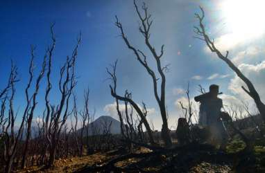 Walhi : Perlunya Partai Hijau sebagai Solusi Perlindungan Lingkungan