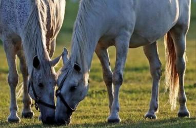 UNESCO Tetapkan Peternakan Kuda Ini Sebagai Warisan Dunia