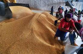 Penuhi Kebutuhan Pakan Ternak, Potensi Impor Jagung Menguat