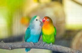 Kementan Gagalkan Penyelundupan Ratusan Burung Lovebird dari Filipina