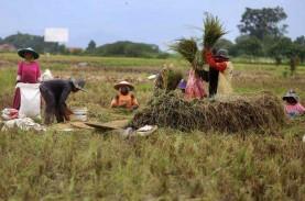 Inovasi Bibit Padi : Penangkapan Kepala Desa di Aceh…