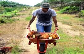 PTPN V Gandeng Apkasindo, Pacu Produktivitas Kebun Sawit Rakyat