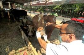 Dislutkanak Cianjur Bentuk Posko Pelayanan Kesehatan Hewan Kurban