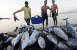 Jepang Bantu Pengolahan Gurita Perikanan Nusantara Makassar