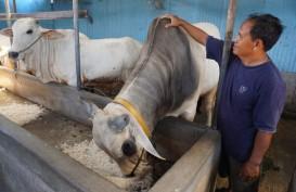 Pasar Jaya Sediakan 20.000 Besek Bambu untuk Daging Kurban