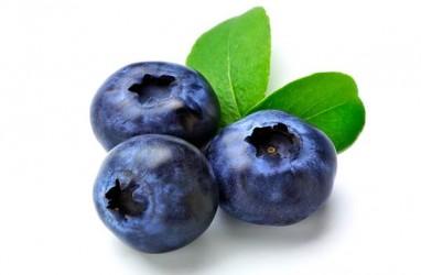 Perlambat Penuaan dengan Konsumsi Blueberry