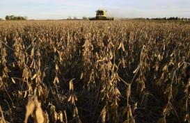 Setop Beli Produk Pertanian, China Serang Balik AS