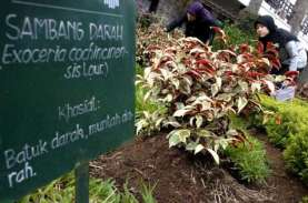 Bakal Ada Urban Farming di Setiap Kantor Wali Kota…