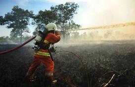Kebakaran HTI Arara Abadi Tak Ganggu Pasokan Kayu INKP