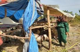 Hewan Kurban: Kambing Pilek dan Berpenyakit Mata Dipaksakan Dijual di Madiun