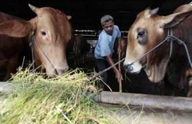 Hewan Kurban di Maluku Dijamin Aman untuk Dikonsumsi