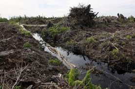 Penghentian Izin Baru Hutan Alam dan Lahan Gambut…