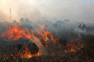 Badan Restorasi Gambut: Kebakaran Lahan Timbulkan Kerugian Ekonomi Triliunan Rupiah