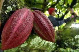 Konsumsi Masih Rendah, Penghiliran Olahan Kakao Dikebut