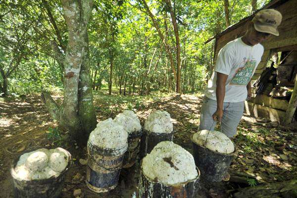 Petani mengumpulkan getah karet seusai dipanen di Nagari Muaro Bodi, Sijunjung, Sumatra Barat, Minggu (12/3). - Antara/Iggoy el Fitra