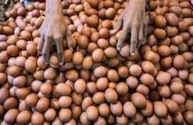 Pertumbuhan Konsumsi Telur Dorong Bisnis Pakan Ternak