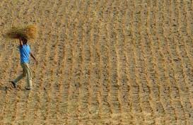 BMKG Pertimbangkan Hujan Buatan untuk Wilayah DIY
