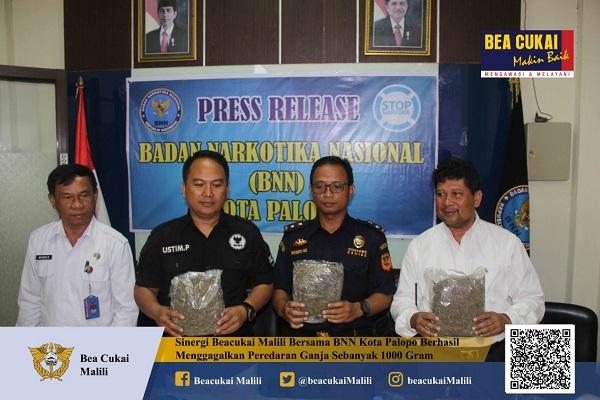 Lewat Operasi Gabungan Bea Cukai Malili dan BNN Kota Palopo Amankan Ganja Bersama