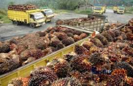 Ekspor CPO ke India Berisiko Terimbas Wacana Pengenaan Safeguard