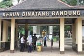 Sebanyak 263 Hewan yang Diawetkan Kebun Binatang Bandung Dimusnahkan