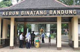 Sebanyak 263 Hewan yang Diawetkan Kebun Binatang Bandung…