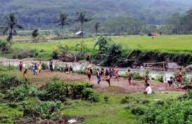 Sungai Cileungsi Tercemar, Ratusan Ikan Sapu-Sapu Ditemukan Mati