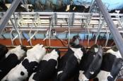Irlandia Cari Pasar Nontradisional Produk Dairy, Indonesia & Malaysia Jadi Target