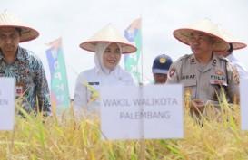 Palembang Tingkatkan Alokasi Dana Pertanian untuk Pertahankan Sawah