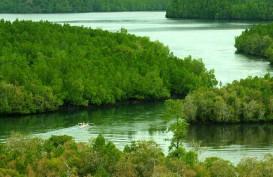 Hutan Mangrove Kalsel 70% Rusak