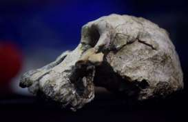 Tengkorak Leluhur Tertua Manusia Berusia 3,8 Juta Tahun Ditemukan
