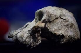 Tengkorak Leluhur Tertua Manusia Berusia 3,8 Juta…