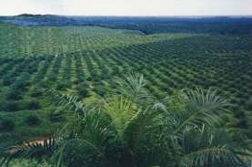 Muara Enim Bidik Peremajaan 5.000 Ha Kebun Sawit