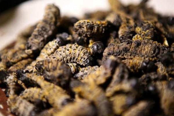 Semangkuk cacing mopane tersaji di restoran pop-up Insect Experience di Cape Town, Afrika Selatan. - Reuters/Sumaya Hisham