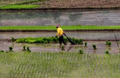 Korporasi Besar Kuasai Benih Rugikan Petani