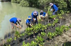 Penyelamatan Hutan Bakau, 3M Indonesia Berdayakan Pesisir Semarang