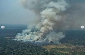 Leonardo DiCaprio Resah, Pakar Sebut Hutan Amazon Tak Produksi 20 Persen Oksigen