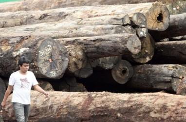 Penurunan Bea Masuk Bakal Tingkatkan Ekspor Plywood