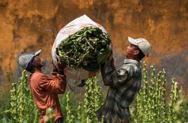Produsen Golongan Menengah Kesulitan Kembangkan Riset Tembakau Alternatif