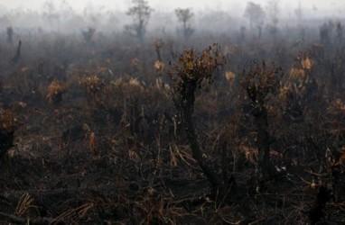 Kabut Asap Halangi Jarak Pandang di Palangka Raya