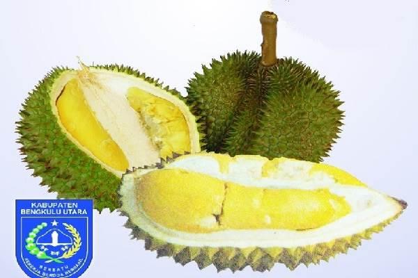 Durian Bentara - bengkulu.litbang.pertanian.go.id