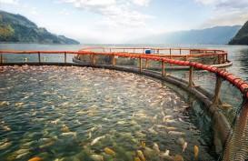 KKP Tebar 266.000 Benih Ikan di Danau Toba