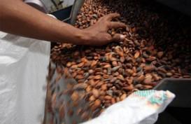 Minim Pasokan Bahan Baku Jadi Problem Industri Pengolahan Kakao