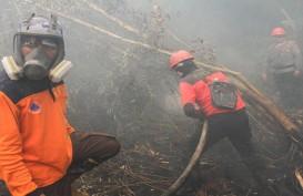 WWF Sebut Karhutla di Indonesia Mirip dengan Kebakaran Hutan Amazon