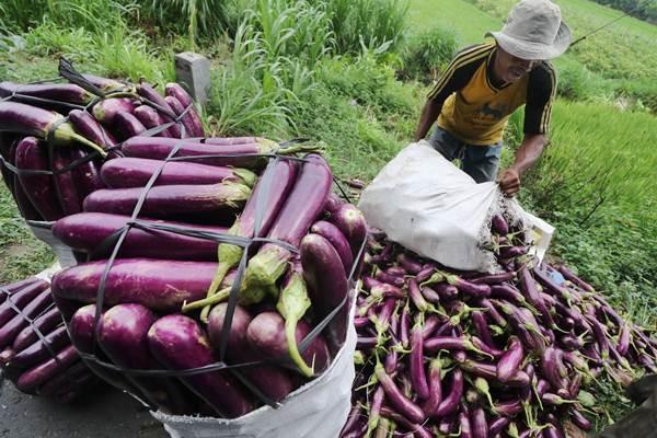 Petani mengemas terong ke dalam karung untuk dijual ke pasar grosir di Desa Sawahan, Kediri, Jawa Timur, Kamis (3/1/2019). - ANTARA/Prasetia Fauzani