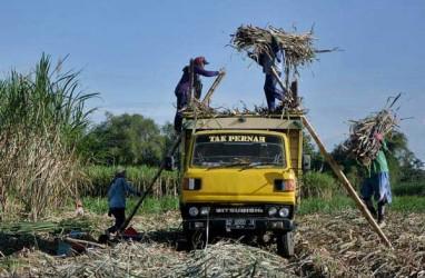 Soal Beli Putus Tebu, Petani Pilih Jual ke Pabrik Gula Swasta