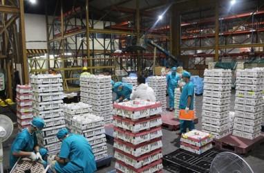 Jaga Stabilitas Harga Ayam, Pemerintah Perpanjang Masa Penarikan Telur