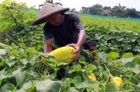 UU Sistem Budidaya Pertanian Berkelanjutan Dinilai…