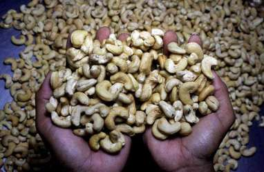 Penelitian Buktikan Makan Kacang Cegah Berat Badan Naik