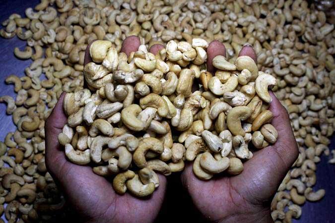 Pekerja memperlihatkan kacang mete di salah satu rumah industri kacang mete di Kecamatan Biring Kanaya, Makassar, Sulawesi Selatan, Selasa (19/3/2019). - ANTARA/Arnas Padda